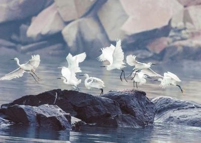 渔港·鹭港·泉港 - 县市新闻 - 东南网泉州频道