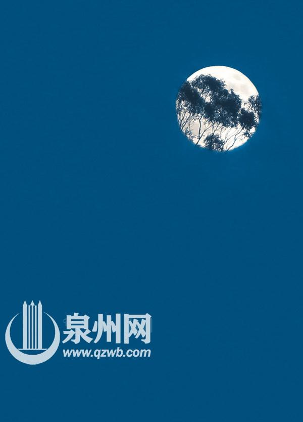 树枝,建筑或人物的剪影,也是月亮不错的前景陪衬. (石勇 摄于清源山)