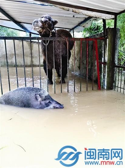 水漫泉州东湖动物园 管理员与动物泡澡一天