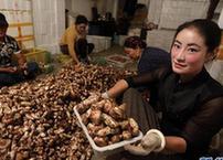 (经济)(3)又是松茸丰收季