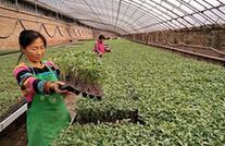 (经济)(2)河北肃宁:科学育苗助农增收